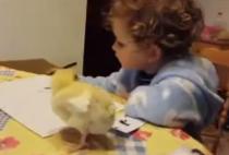 niña estudiando pollito