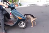 video perro conduciendo whatsapp