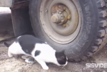 video para whatsapp de raton escondido en rueda de camion de un gato