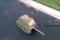 video del perro tanque